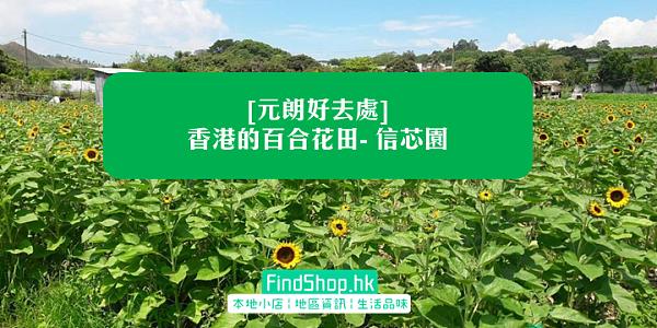 [元朗好去處] 香港的百合花田- 信芯園