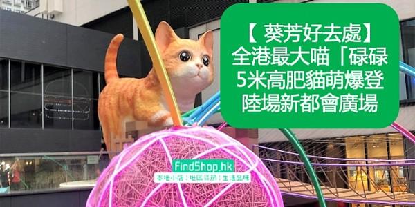 【 葵芳好去處】全港最大喵「碌碌」    5米高肥貓萌爆登陸場新都會廣場