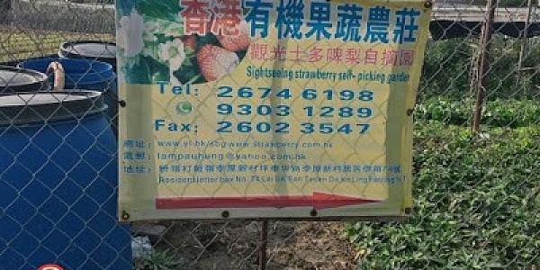香港有機農莊.觀光士多啤梨園