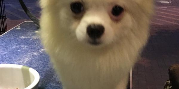 寵物美容工作室 - 上門寵物美容服務@小白‧點子_栢‧工作室