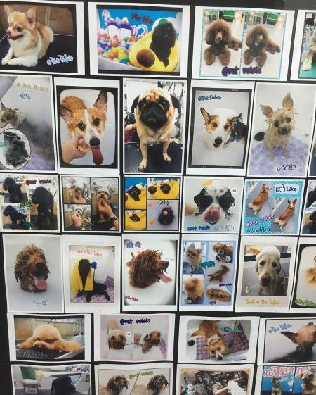 寶貝寵物美容專門店 Baby Pet